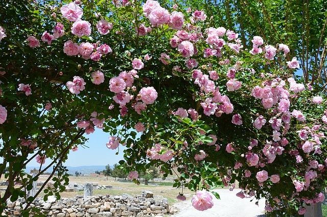 flower-1055635_640
